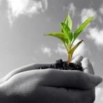 Agricoltura: si profila un tetto massimo per i contributi dell'Unione Europea