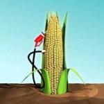 Le materie prime per i Bio carburanti si danno una regolata