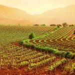 Fondi per imprese agricole in Toscana