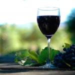 Giornata della Vite e del Vino: genetica e nel trattamento di varietà nel settore vitivinicolo